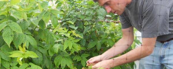 etna-garden